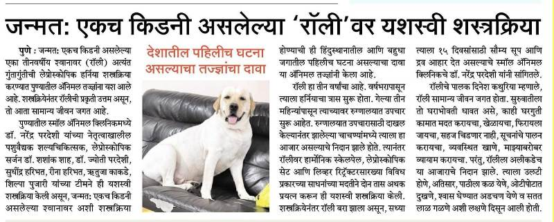 Hernia surgery conducted on dog for first time in India